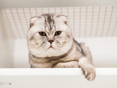 "Гостиница для кошек ""Мур-Мяу""/"