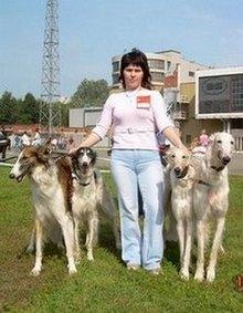 Питомник занимается разведением собак породы: левретка, русская псовая борзая, чихуахуа, немецкий шпиц. Предлагаем перспективных щенков и кобелей для вязок./