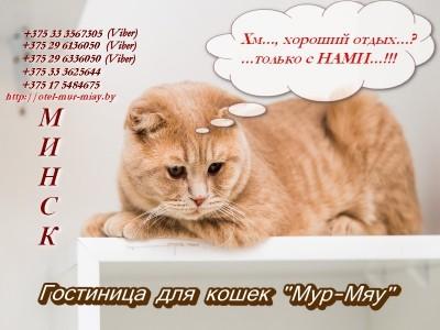Предоставление услуг по содержанию и уходу за животными(кошки)./